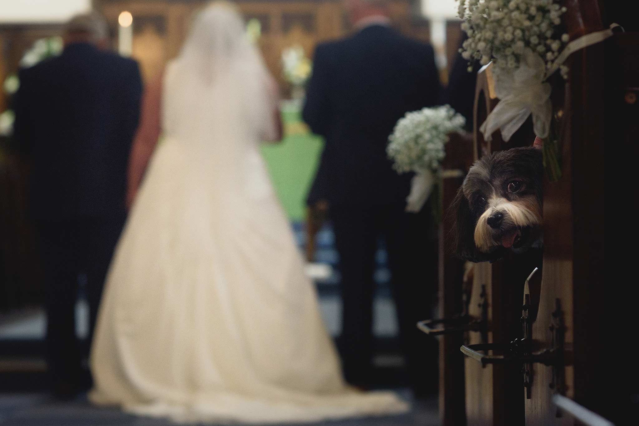 Dog watching as the bride walks down the aisle inside church