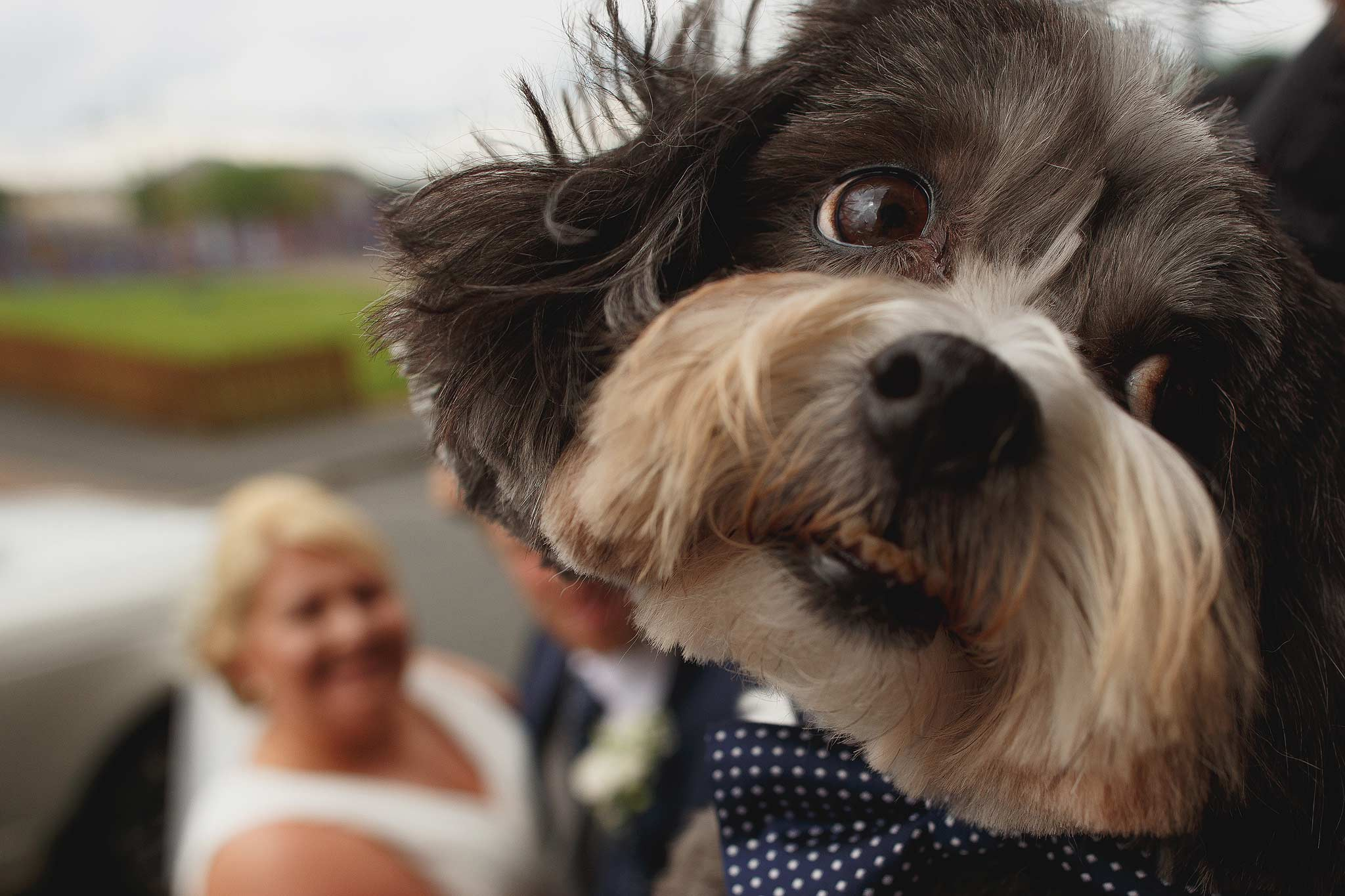 Bride groom and dog having a family portrait