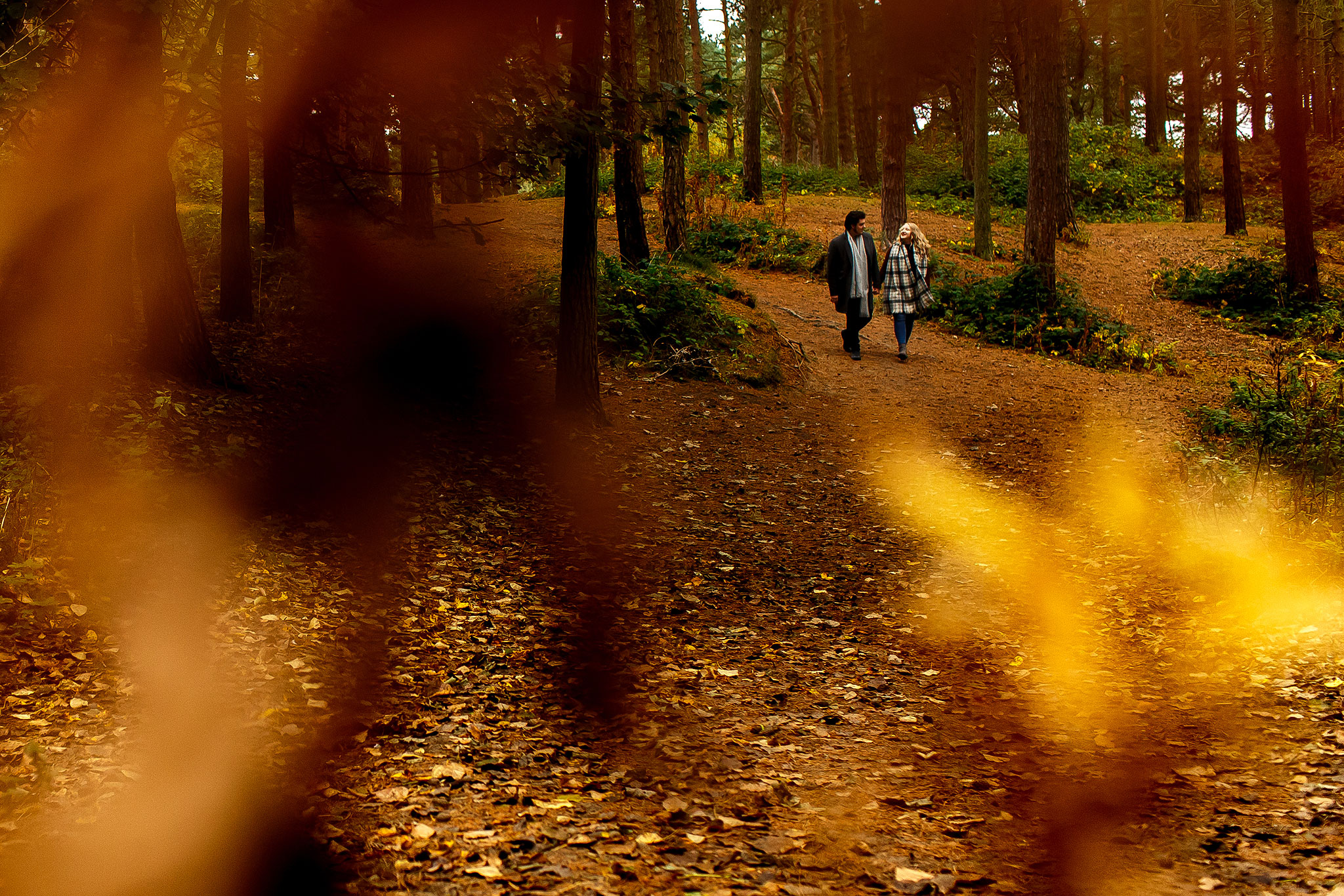Autumn engagement shoot in the woods with golden leaves. Taken from far away with couple framed in leaves.