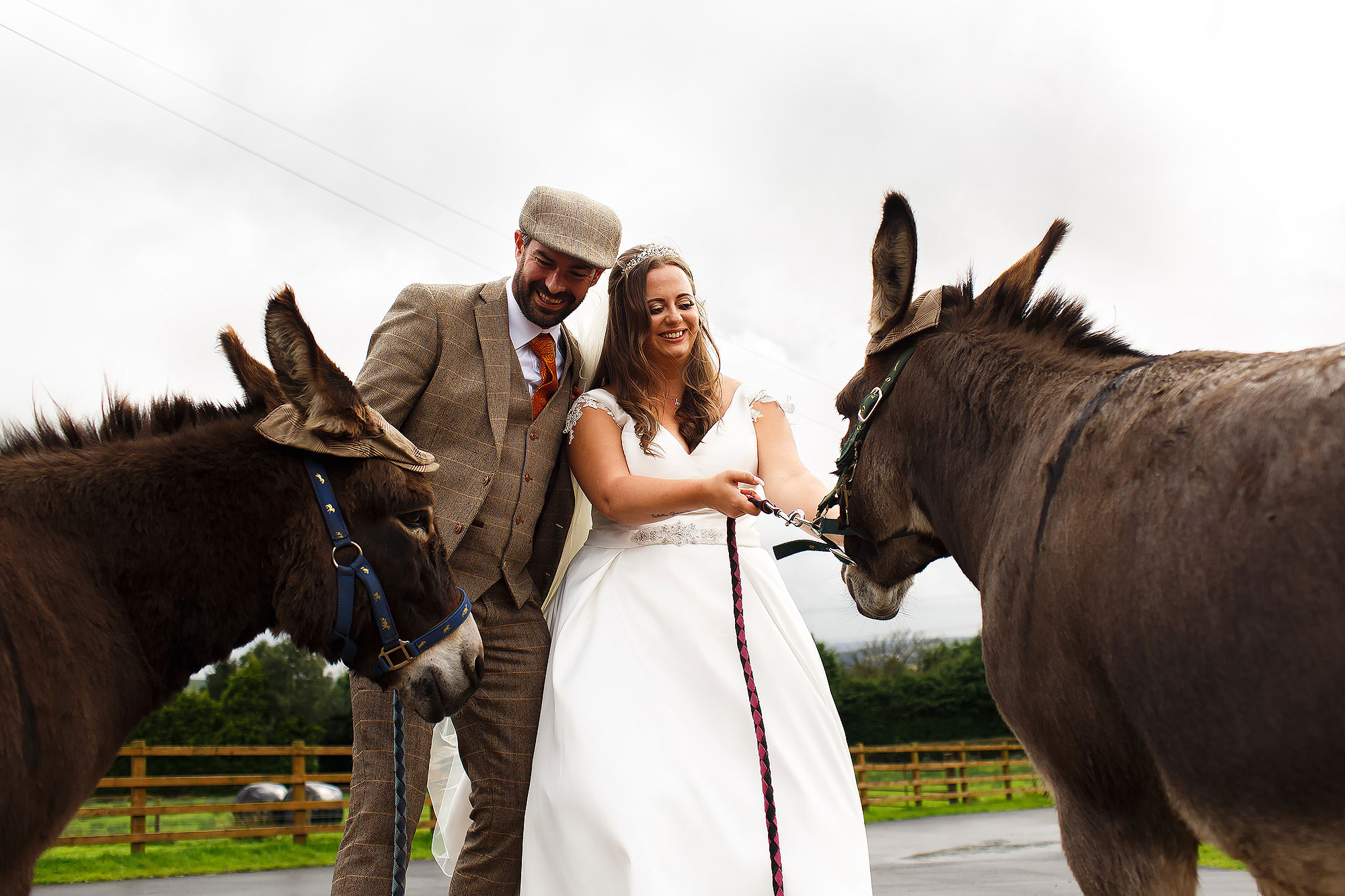 Bride and Groom wearing flat cap holding the donkeys outside the Wellbeing Farm | Wellbeing Farm wedding photographs by Toni Darcy Photography