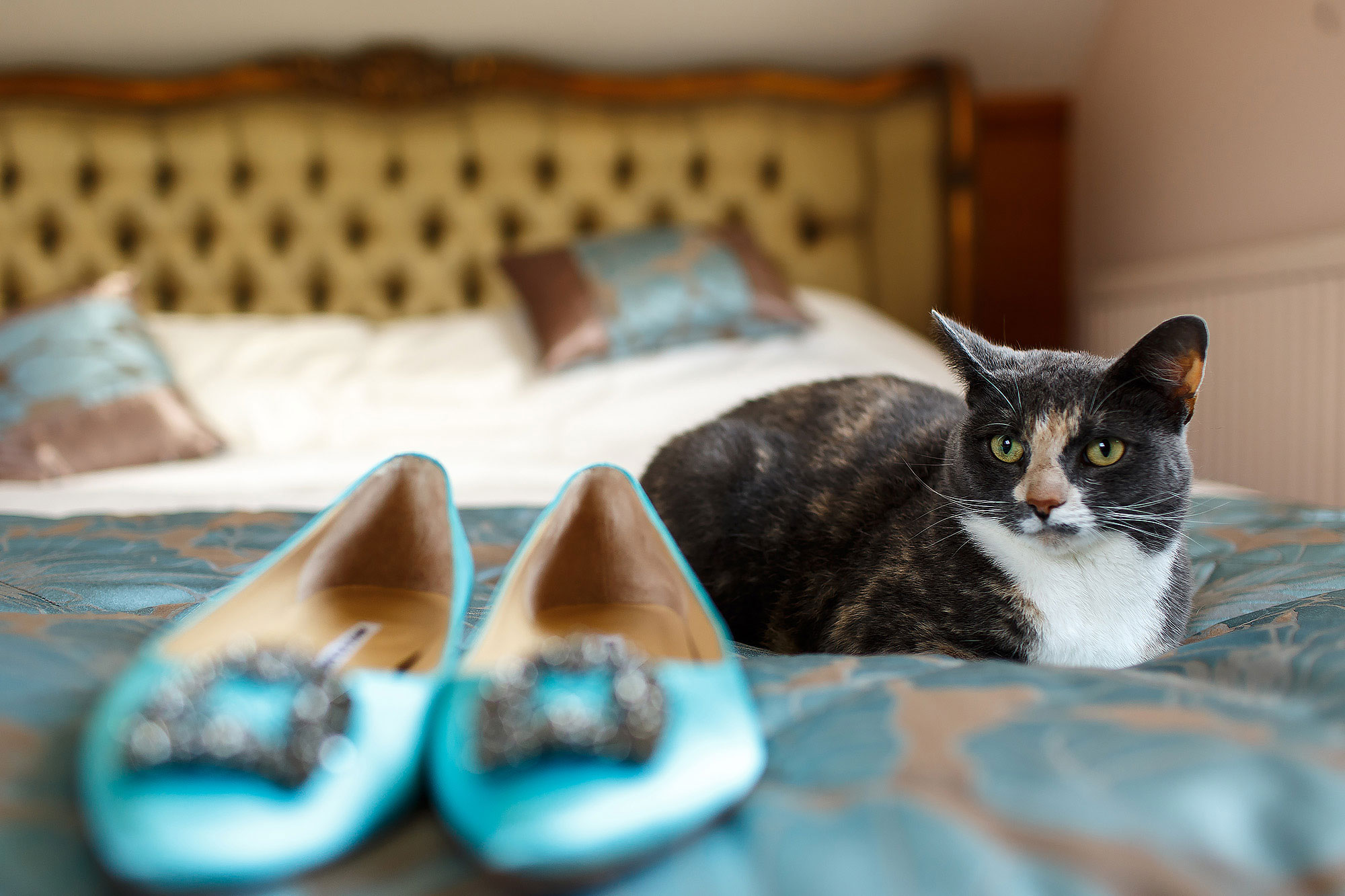 Cat sat on a bed staring at the aqua blue wedding shoes | Lake District Wedding by Toni Darcy Photography
