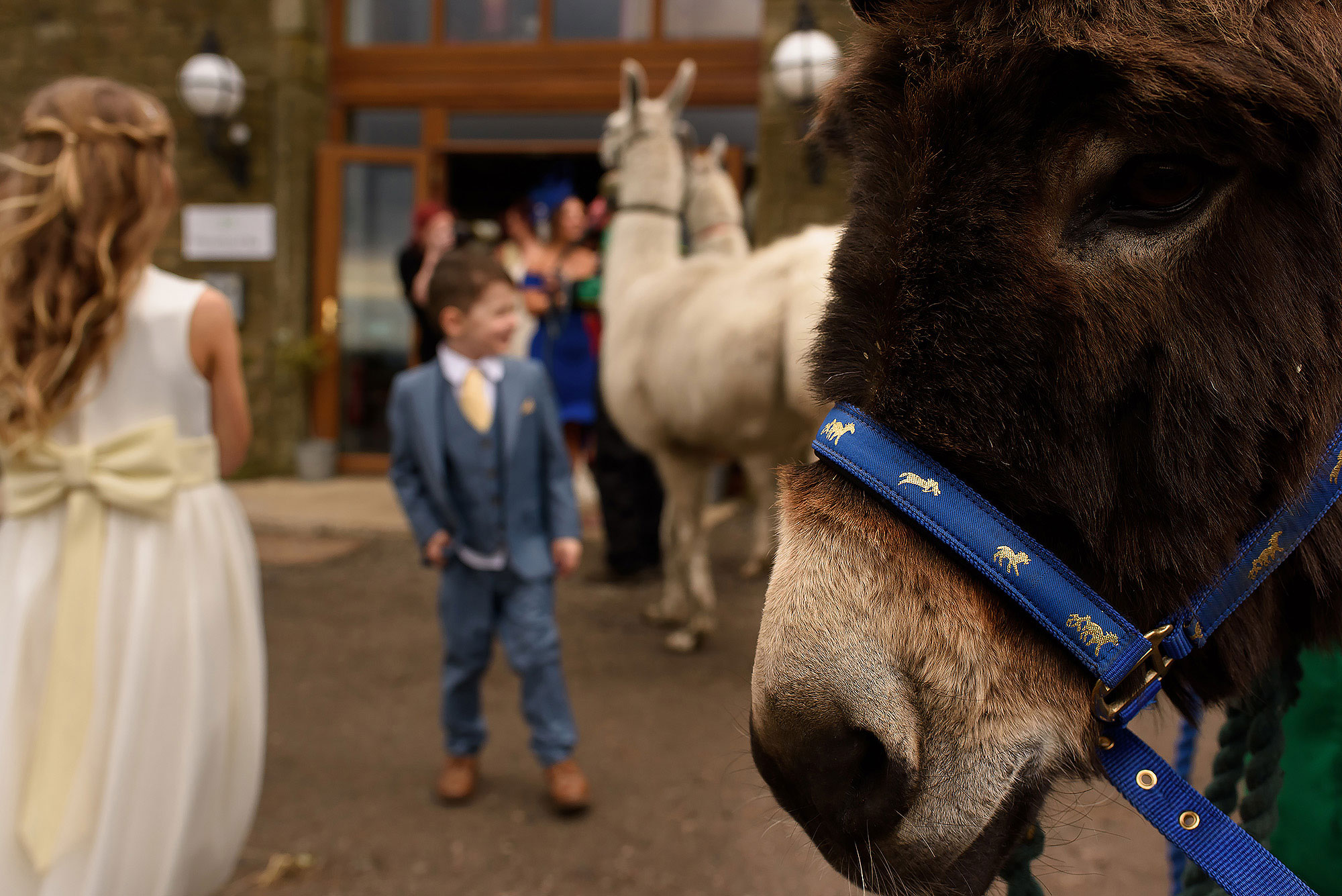 Face of donkey with page boy and flower girl in the background | Summer wedding at Wellbeing Farm - Toni Darcy Photography